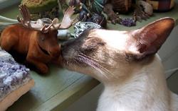 minkey-meets-wilbur