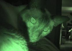 minkey-night-vision