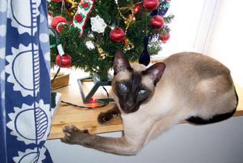 minkey-christmas